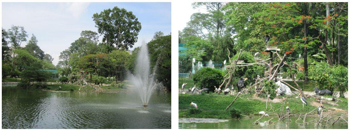 Thiên nhiên bên Hồ Sen