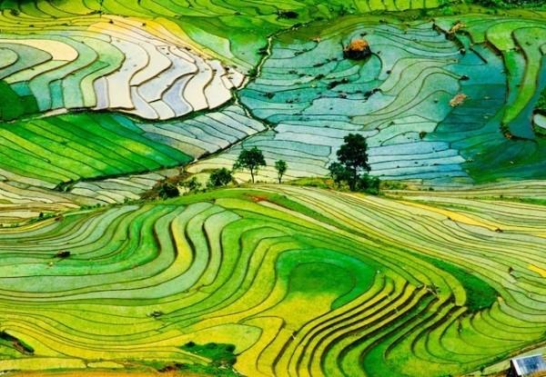 Ngắm và chụp hình những ruộng lúa bậc thang đẹp nhất tây bắc