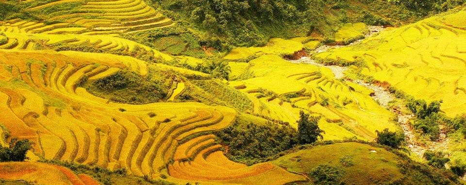 Sapa tháng 9 – 10 là mùa lúa chín vàng trên những thửa ruộng bậc thang.