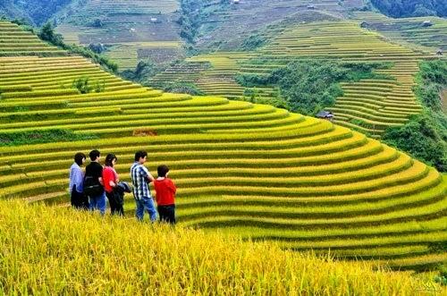Ngắm và chụp hình những ruộng lúa bậc thang đẹp nhất tây bắc.
