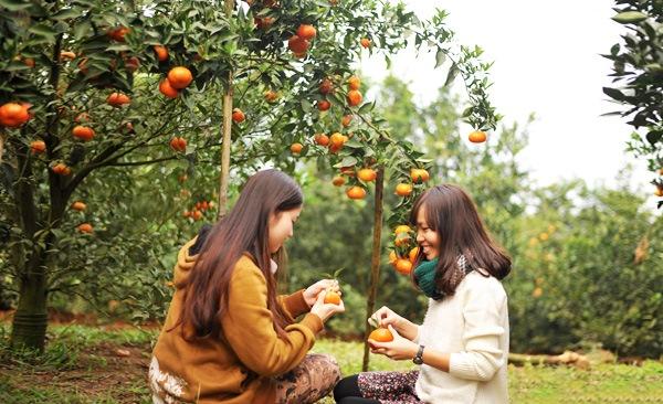 Điểm du lịch hấp dẫn: Vườn cây trái Cái Mơn