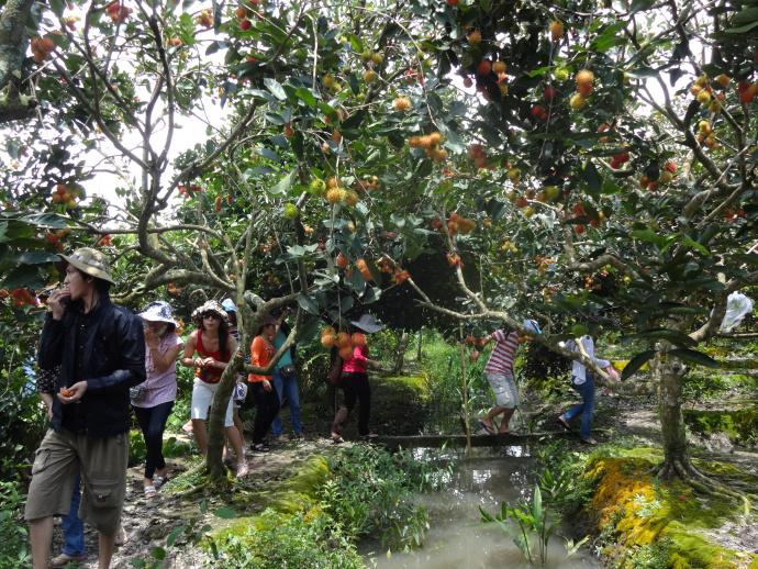 Trải nghiệm hấp dẫn ở Bến Tre: Thăm miệt vườn Bến Tre