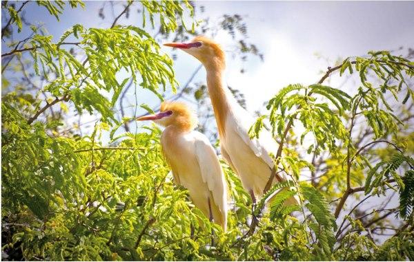 Điểm du lịch hấp dẫn: Sân chim Vàm Hồ