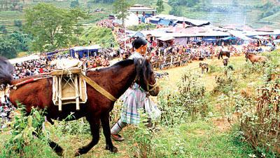 Chợ gia súc Si Ma Cai nhóm họp mỗi tháng, nơi người dân trong vùng mang trâu, bò và rất nhiều ngựa đi bán