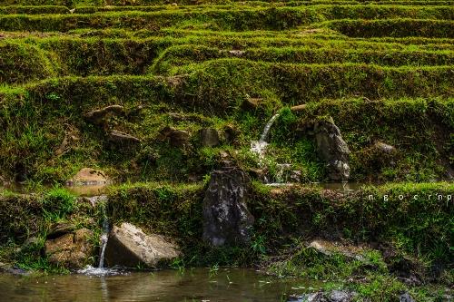 Các mương dẫn nước từ khe suối về ruộng.