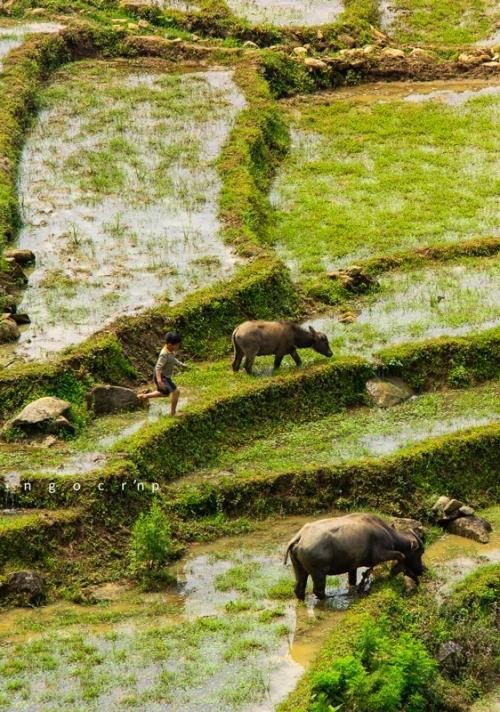 Những thửa gần nguồn nước hoặc có mạch nước được cày trước và trở thành nơi trữ nước cho các mảnh ruộng tiếp theo