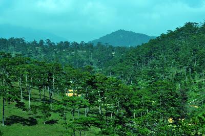 Khu đồi thông xanh mướt ,một vẻ đẹp đặc trưng của Đà Lạt