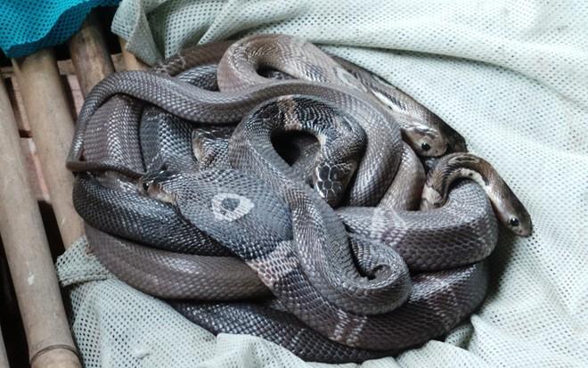 Khu nuôi rắn độc