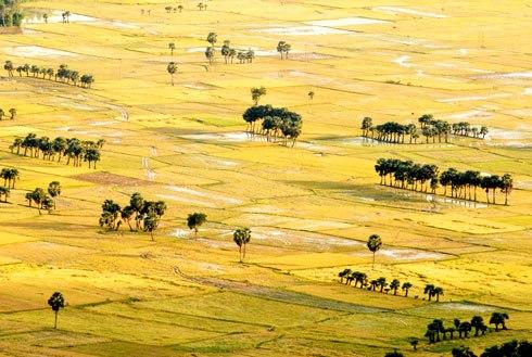 Từ nơi đặt tượng Phật Di Lặc du khách có thể ngắm toàn cảnh cánh đồng vàng rực ở dưới đồng bằng sắp bước vào mùa thu hoạch.