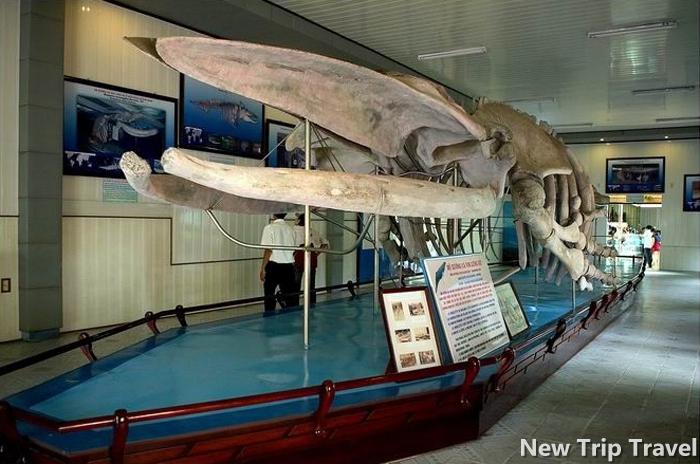 Bộ xương cá voi khổng lồ dài gần 26m, cao 3m đã bị chôn vùi trong đất