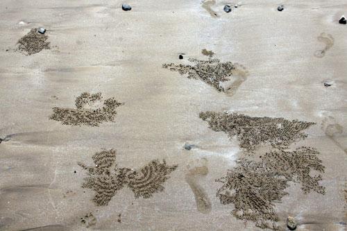 Bờ cát hoang sơ với hoa văn dã tràng