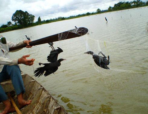 Người dân dăng lưới bẫy thú