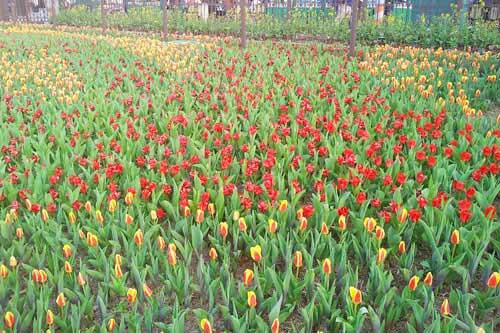 Vườn Hoa Nhiệt Đới Mộc Châu.