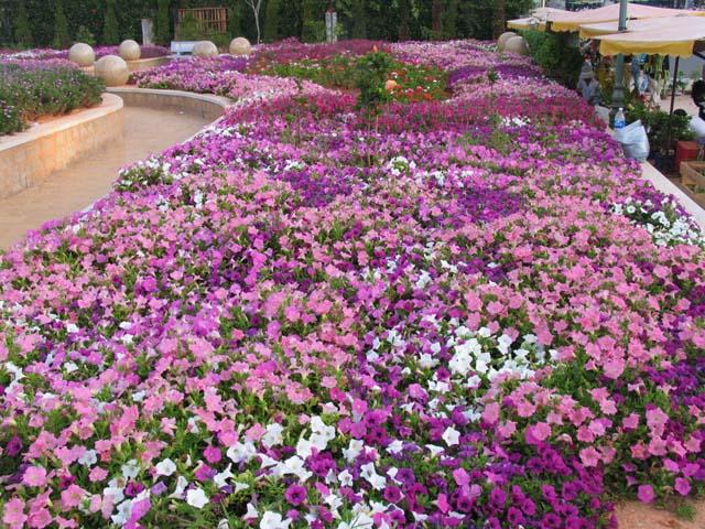 Hoa ở khắp nơi trong vườn hoa Đà Lạt