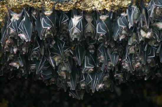 Hang Dơi - nơi trú ngụ của hàng ngàn con dơi