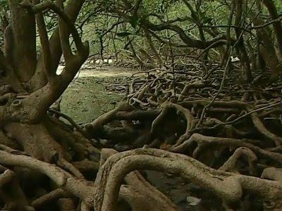 khu sinh thái đảo Ba Mùn