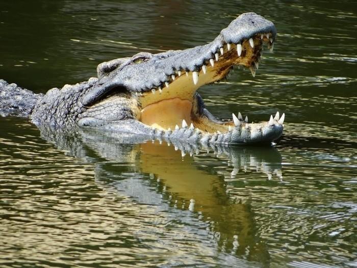 Bàu Sấu
