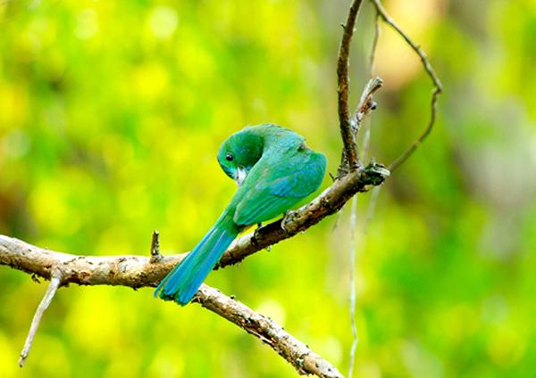 Rất nhiều loài chim quý hiếm