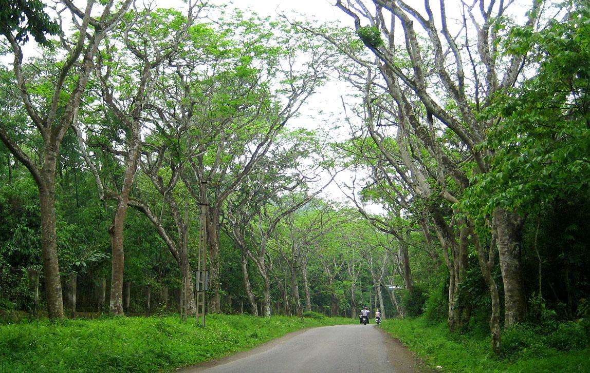 Cúc Phương là nơi cư trú của nhiều loài chim nhiệt đới với nhiều sắc lông, kích cỡ, âm thanh giọng hót.