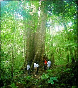 Du khách tham quan rừng Cúc Phương