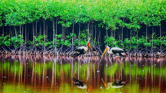 Động vật tại vườn quốc gia Mũi Cà Mau. (Ảnh: Tuổi Trẻ)