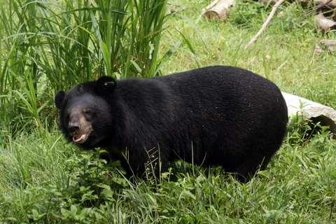 Vườn quốc gia Tam Đảo nằm trọn trên dãy núi Tam Đảo.