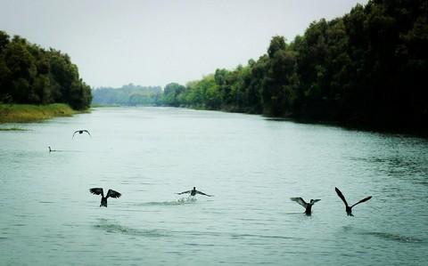 Đàn chim sải cánh giữa mênh mông sông nước và cánh rừng tràm ngút ngàn