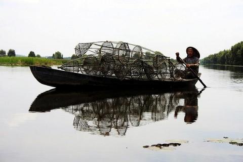 Nhiều hộ gia đình nghèo tại Tràm Chim được phép đặt lờ bắt cá, hái rau…khai thác tài nguyên trong vườn để kiếm thêm thu nhập    Ảnh: N.V.Hùng, H.Nghị