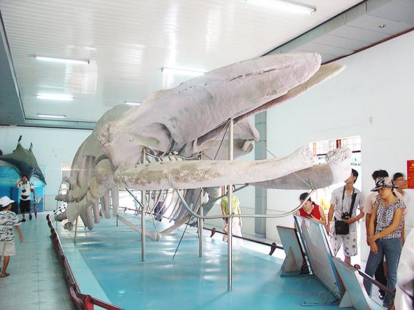 Viện Hải Dương Học - Điểm du lịch Hấp dẫn ở Nha Trang
