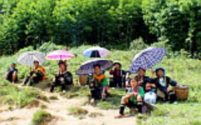 Những bản làng dân tộc đẹp nhất Sapa
