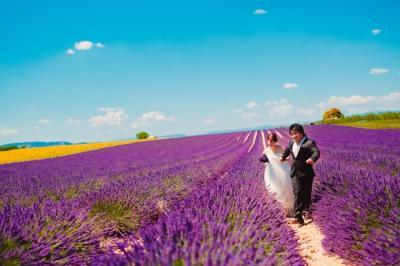 Cánh đồng oải hương trong bộ ảnh cưới của cặp đôi Việt