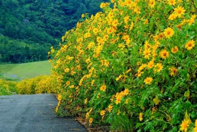 Những cung đường phượt Mùa hoa dã quỳ Đà Lạt