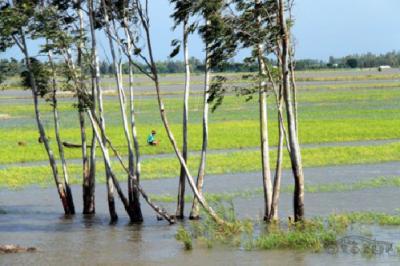 Trải nghiệm tắm đồng mùa nước nổi ở miền Tây