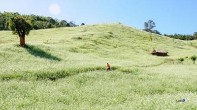 Điểm chụp ảnh đẹp mê ly ở Mộc Châu mùa hoa cải