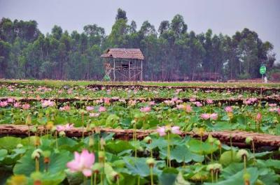 Điểm du lịch nổi tiếng Đồng Tháp