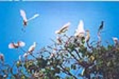 Khám phá mùa nước nổi miền tây ở Đồng Tháp Mười