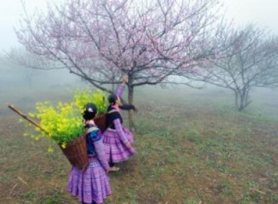 Du lịch Mộc Châu những mùa hoa
