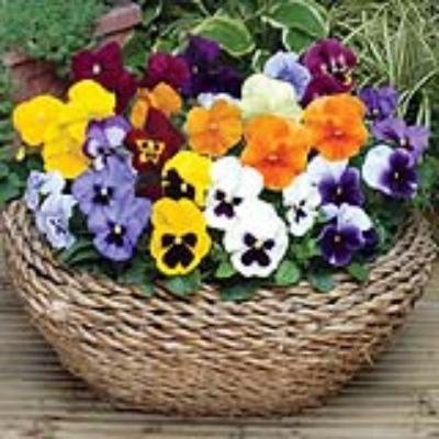 Khám phá những loài hoa đẹp ở Đà Lạt.