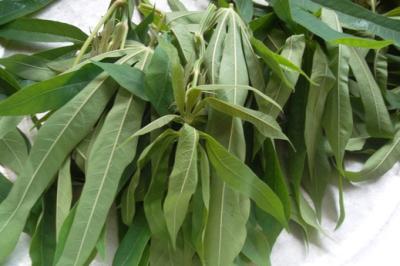 Lên Phú Thọ ăn canh rau sắn muối chua