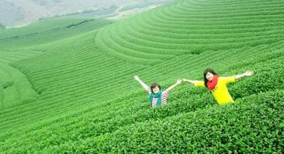 Miên man những nương chè xanh ngát ở Mộc Châu
