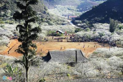 Cao nguyên Mộc Châu đẹp mơ màng trong sắc hoa mùa xuân