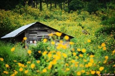 Những điểm phải đến cho những bạn yêu thích hoa dã quỳ