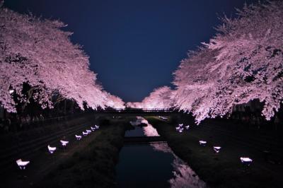 Những bức ảnh khiến bạn muốn tới Nhật ngay lập tức