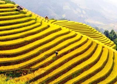 Cung đường phượt Tây Bắc hấp dẫn trong mùa lúa chín vàng
