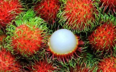 """Những trái cây quê """"chuyên trị"""" giải nhiệt ngày nắng"""