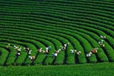 Những trải nghiệm hấp dẫn ở Mộc Châu