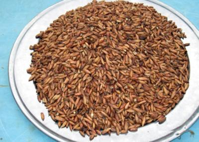 Đặc sản hạt bàng rang Côn Đảo