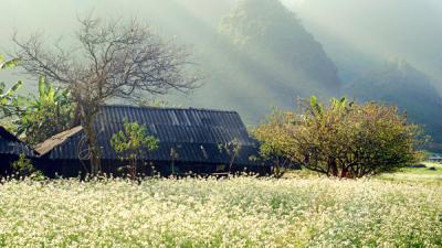Muôn loài hoa đua sắc ở Mộc Châu trong mùa đông