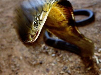 'Vương quốc rắn' ở Quảng Bình