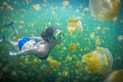 Bơi lội giữa biển sứa ở Palau